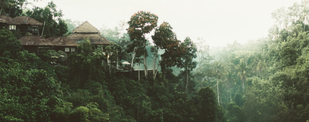 Urwald Sri Lanka